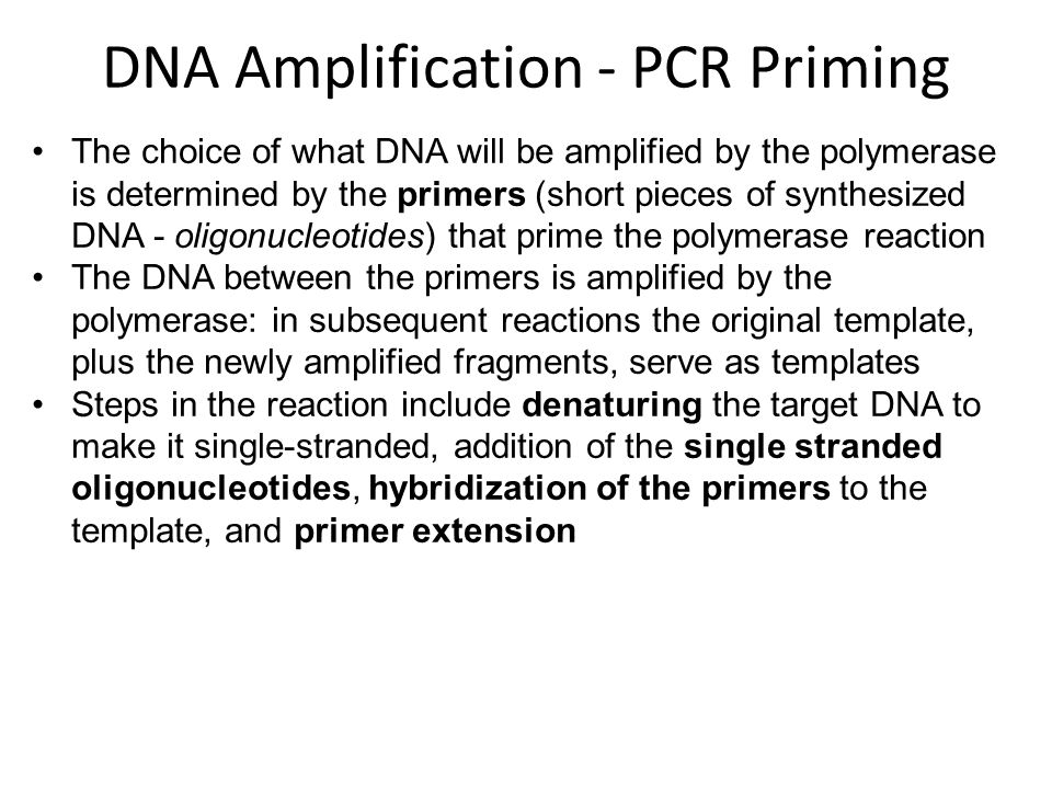 The choice of what DNA will be amplified by the polymerase is determined by the primers (short pieces of synthesized DNA - oligonucleotides) that prime the polymerase reaction The DNA between the primers is amplified by the polymerase: in subsequent reactions the original template, plus the newly amplified fragments, serve as templates Steps in the reaction include denaturing the target DNA to make it single-stranded, addition of the single stranded oligonucleotides, hybridization of the primers to the template, and primer extension DNA Amplification - PCR Priming