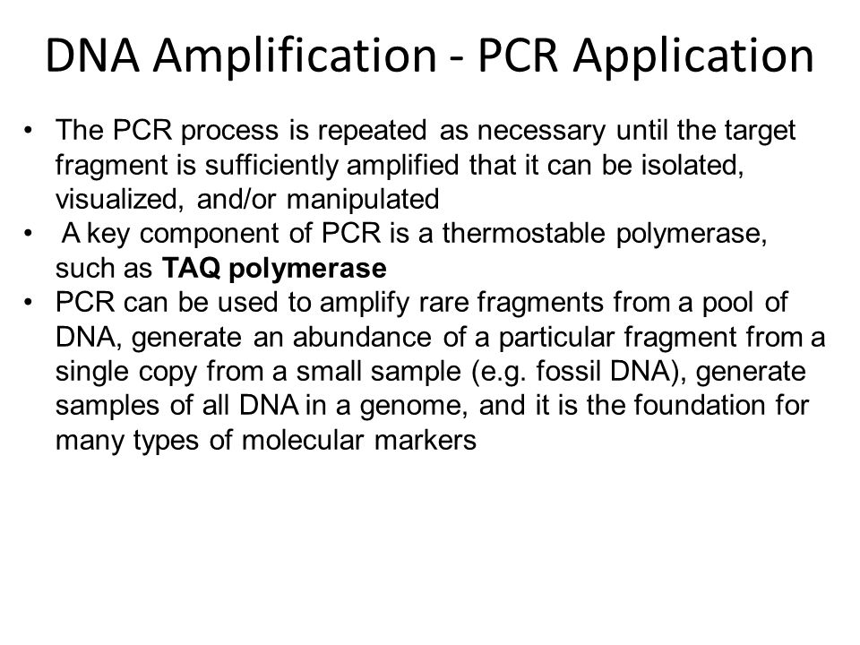 The PCR process is repeated as necessary until the target fragment is sufficiently amplified that it can be isolated, visualized, and/or manipulated A key component of PCR is a thermostable polymerase, such as TAQ polymerase PCR can be used to amplify rare fragments from a pool of DNA, generate an abundance of a particular fragment from a single copy from a small sample (e.g.
