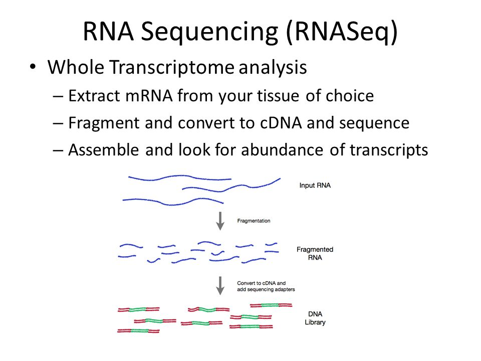 RNA Sequencing (RNASeq) Whole Transcriptome analysis – Extract mRNA from your tissue of choice – Fragment and convert to cDNA and sequence – Assemble and look for abundance of transcripts