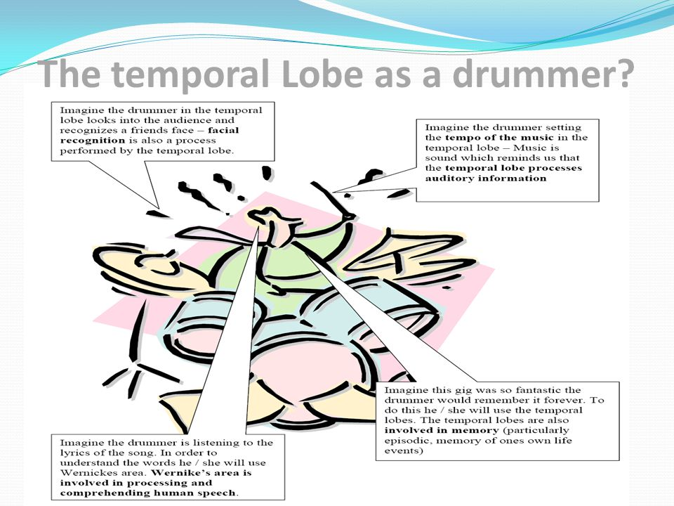 The temporal Lobe as a drummer?