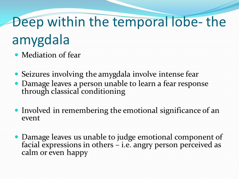 Deep within the temporal lobe- the amygdala Mediation of fear Seizures involving the amygdala involve intense fear Damage leaves a person unable to le