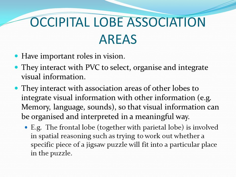 OCCIPITAL LOBE ASSOCIATION AREAS Have important roles in vision. They interact with PVC to select, organise and integrate visual information. They int