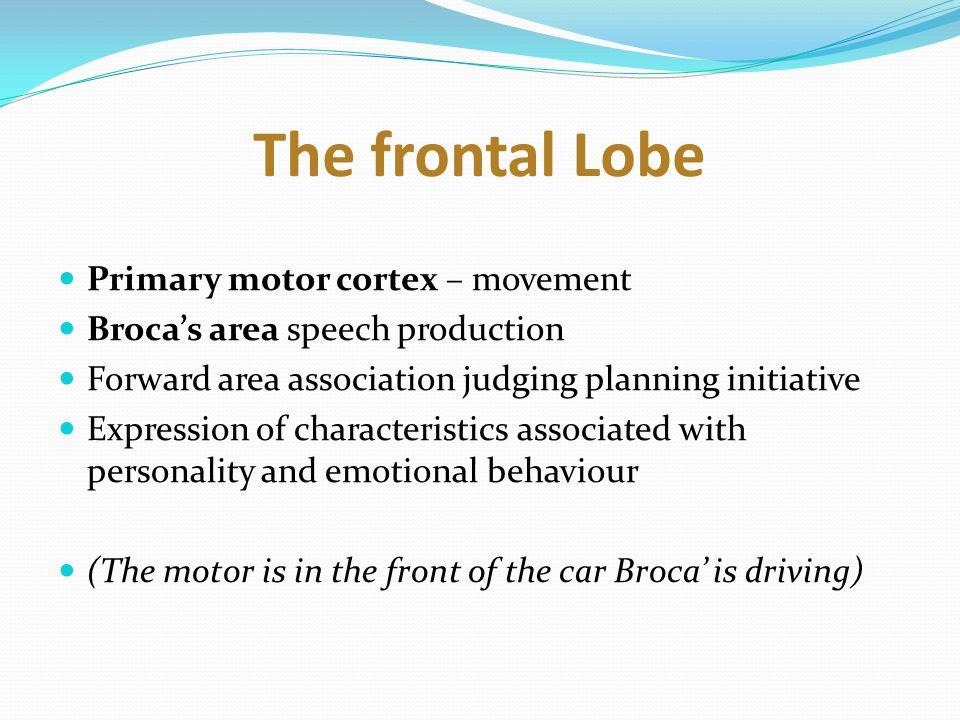 The frontal Lobe as a car?