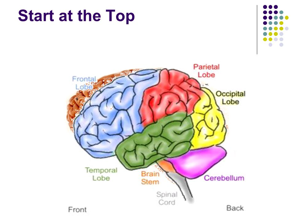 Think about it start at the top objectives students will be able 3 start at the top ccuart Choice Image