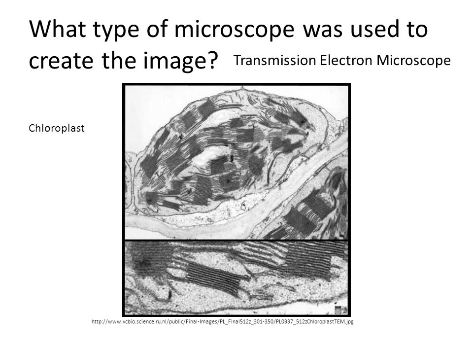 What type of microscope was used to create the image? http://www.vcbio.science.ru.nl/public/Final-Images/PL_Final512z_301-350/PL0337_512zChloroplastTE