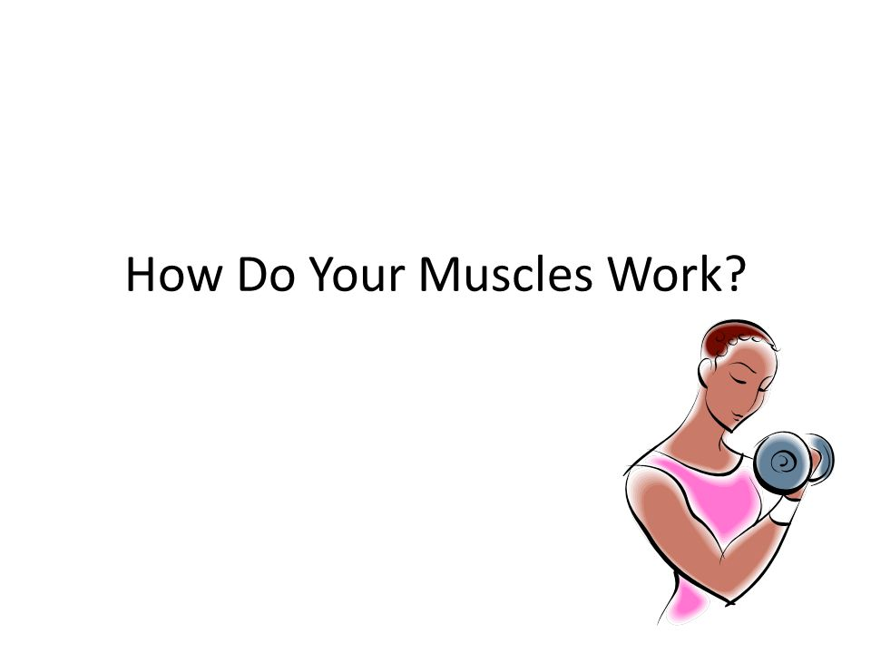 How Do Your Muscles Work?