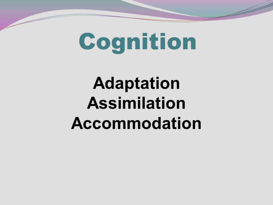 Cognition Adaptation Assimilation Accommodation