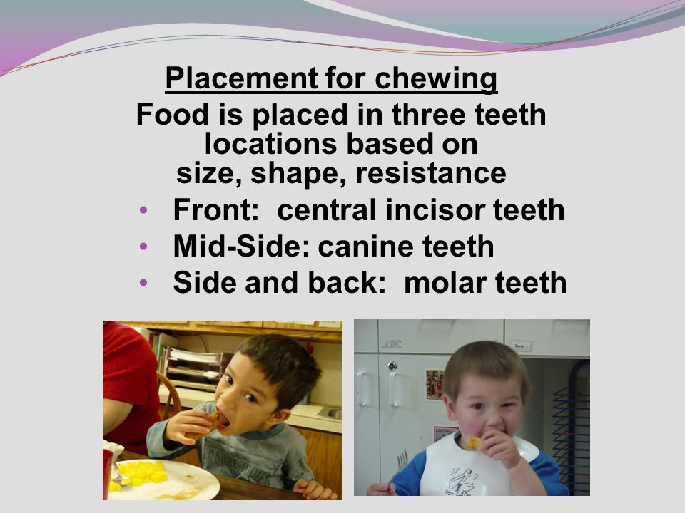 Placement for chewing Food is placed in three teeth locations based on size, shape, resistance Front: central incisor teeth Mid-Side: canine teeth Side and back: molar teeth