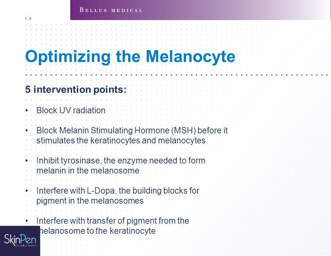 Optimizing the Melanocyte 5 intervention points: Block UV radiation Block Melanin Stimulating Hormone (MSH) before it stimulates the keratinocytes and