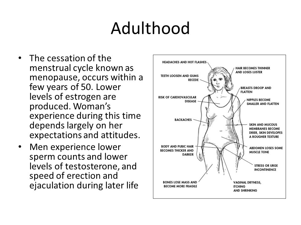 Adulthood The cessation of the menstrual cycle known as menopause, occurs within a few years of 50. Lower levels of estrogen are produced. Woman's exp