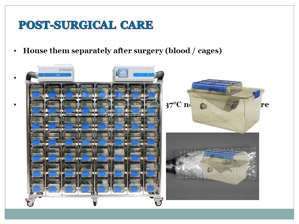 House them separately after surgery (blood / cages) Low light, noise and manipulations Temperature: 27-30°C adults and 35-37°C neonates until restore parameters (mice!)