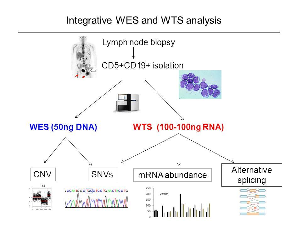 Integrative WES and WTS analysis CD5+CD19+ isolation WTS (100-100ng RNA) mRNA abundance Alternative splicing SNVs Lymph node biopsy WES (50ng DNA) CNV