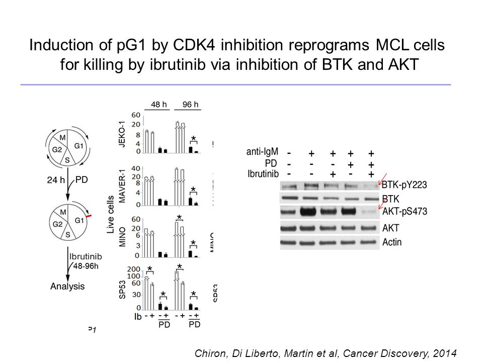 Induction of pG1 by CDK4 inhibition reprograms MCL cells for killing by ibrutinib via inhibition of BTK and AKT Chiron, Di Liberto, Martin et al, Cancer Discovery, 2014