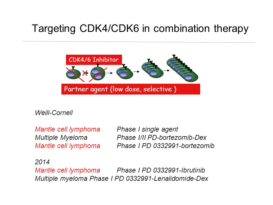 Induction of pG1 sustains the inactivation of AKT by PI3K  inhibitor in MCL cells D.