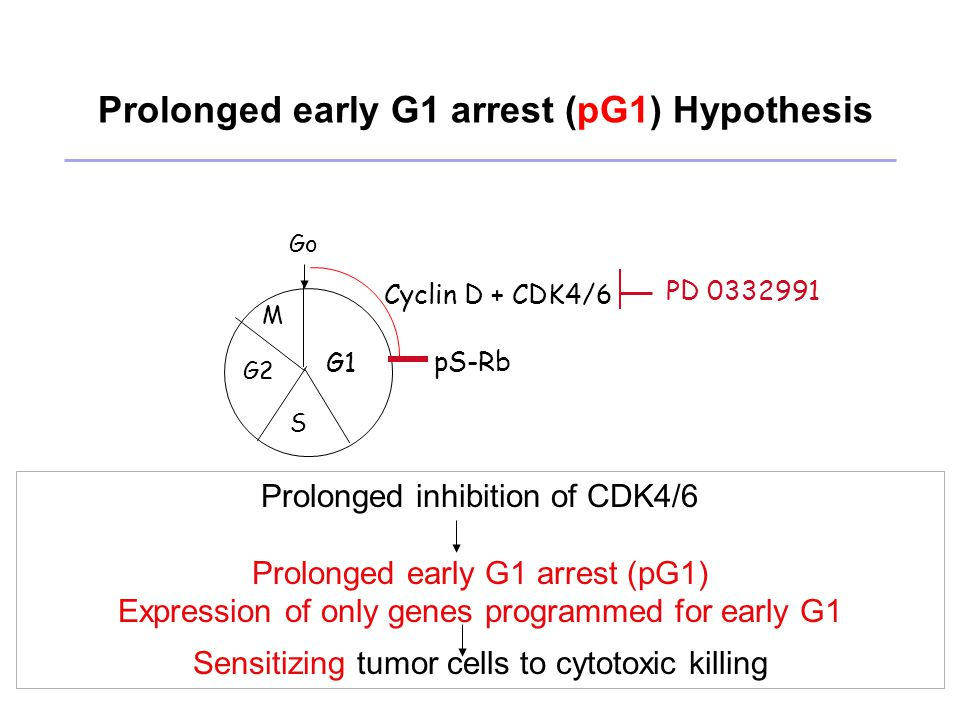 Cyclin D + CDK4/6 PD 0332991 G1 S G2 M Go pS-Rb Prolonged early G1 arrest (pG1) Hypothesis Prolonged inhibition of CDK4/6 Prolonged early G1 arrest (pG1) Expression of only genes programmed for early G1 Sensitizing tumor cells to cytotoxic killing