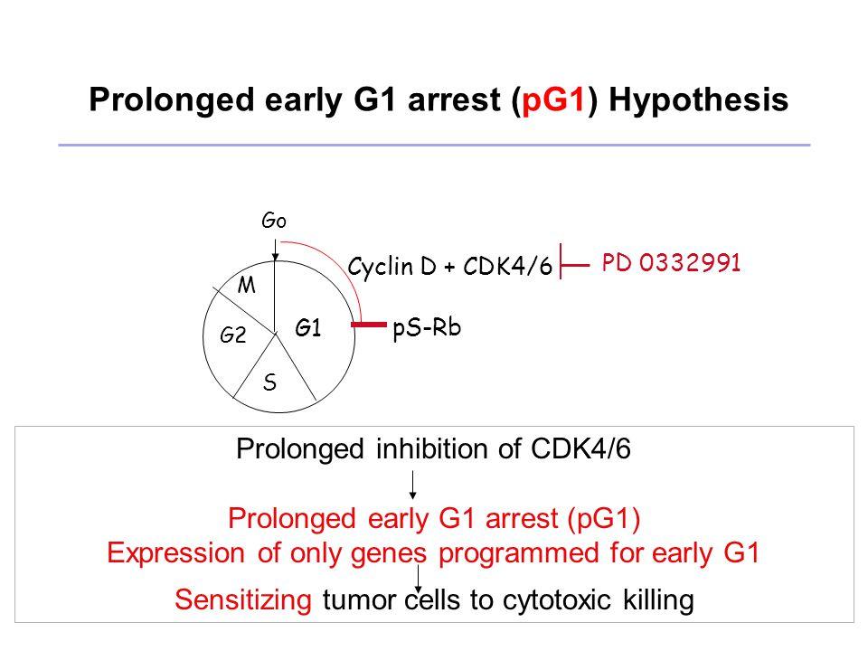 pG1 reprogramming MCL cells for ibrutinib inhibition of Bruton Tyrosine Kinase (BTK) Ibrutinib is effective in MCL.