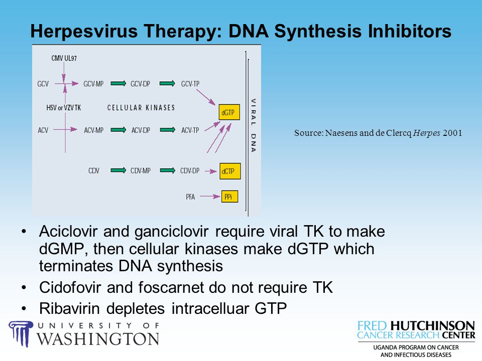 Herpesvirus Therapy: DNA Synthesis Inhibitors Aciclovir and ganciclovir require viral TK to make dGMP, then cellular kinases make dGTP which terminate