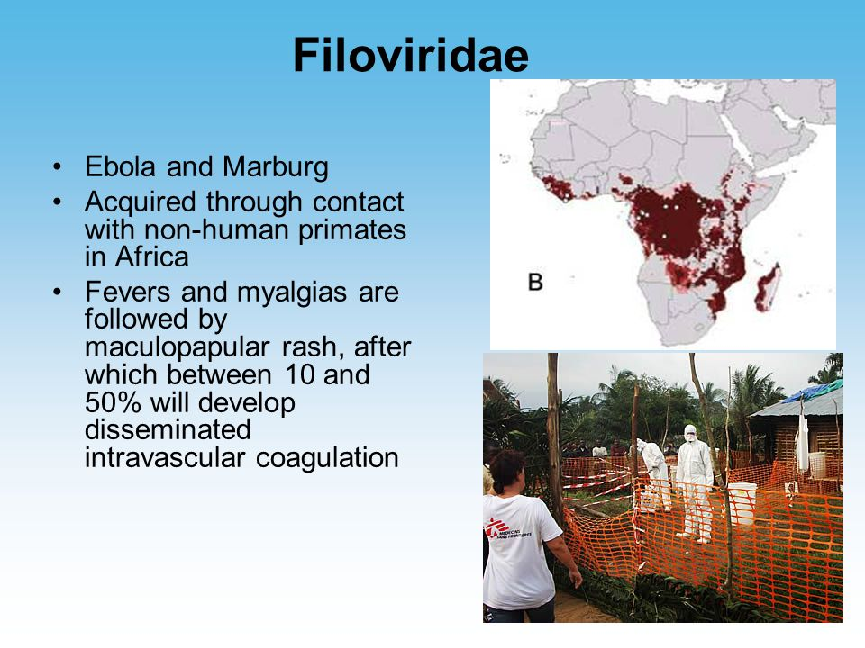 Filoviridae Ebola and Marburg Acquired through contact with non-human primates in Africa Fevers and myalgias are followed by maculopapular rash, after