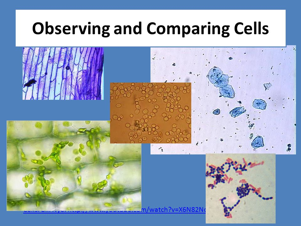 Cells: Bill Nye: http://www.youtube.com/watch?v=X6N82No4Nz8 Observing and Comparing Cells