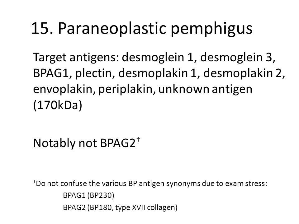 15. Paraneoplastic pemphigus Target antigens: desmoglein 1, desmoglein 3, BPAG1, plectin, desmoplakin 1, desmoplakin 2, envoplakin, periplakin, unknow