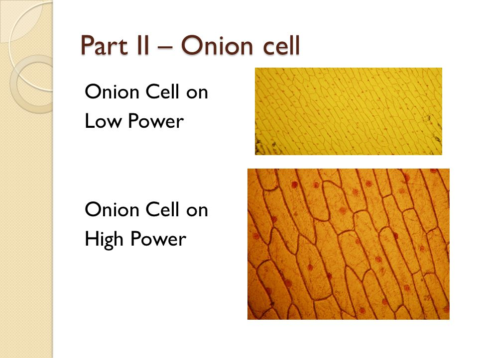 Part II – Onion cell Onion Cell on Low Power Onion Cell on High Power