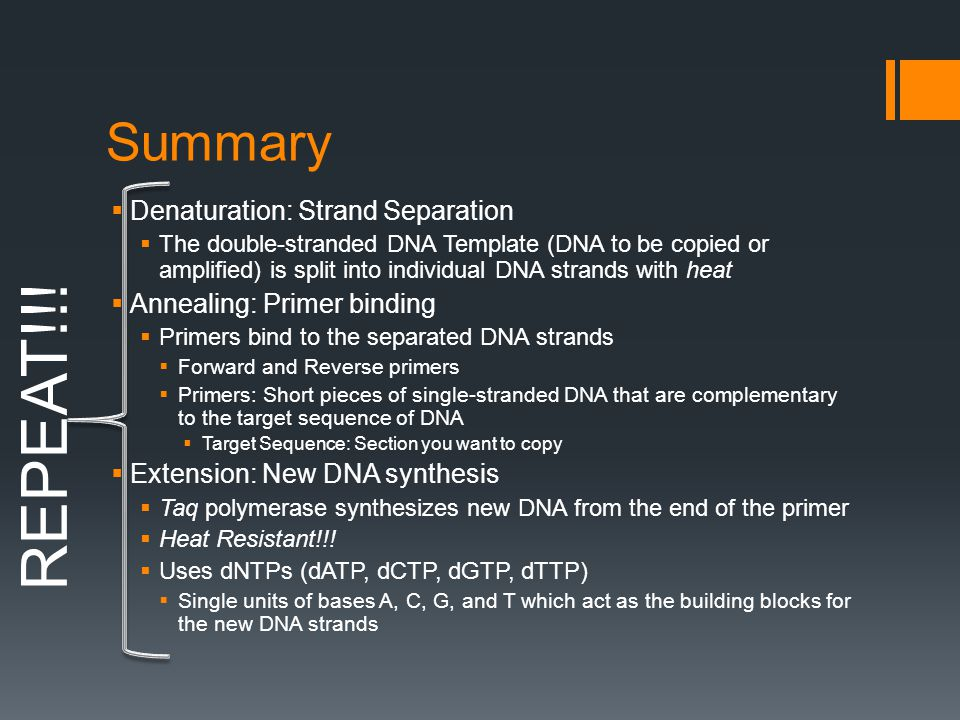 Summary  Denaturation: Strand Separation  The double-stranded DNA Template (DNA to be copied or amplified) is split into individual DNA strands with heat  Annealing: Primer binding  Primers bind to the separated DNA strands  Forward and Reverse primers  Primers: Short pieces of single-stranded DNA that are complementary to the target sequence of DNA  Target Sequence: Section you want to copy  Extension: New DNA synthesis  Taq polymerase synthesizes new DNA from the end of the primer  Heat Resistant!!.