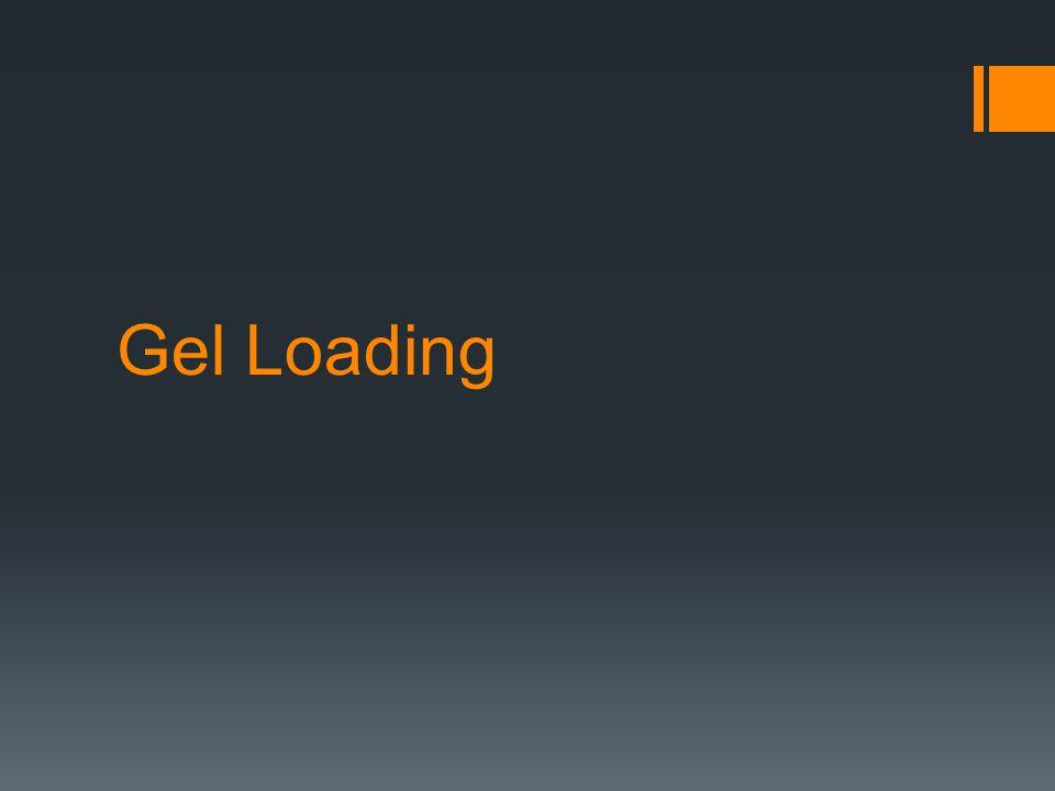 Gel Loading