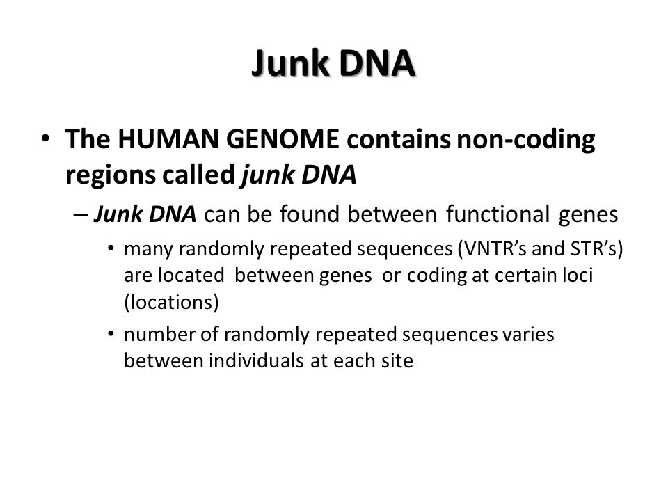 Junk DNA The HUMAN GENOME contains non-coding regions called junk DNA – Junk DNA can be found between functional genes many randomly repeated sequences (VNTR's and STR's) are located between genes or coding at certain loci (locations) number of randomly repeated sequences varies between individuals at each site