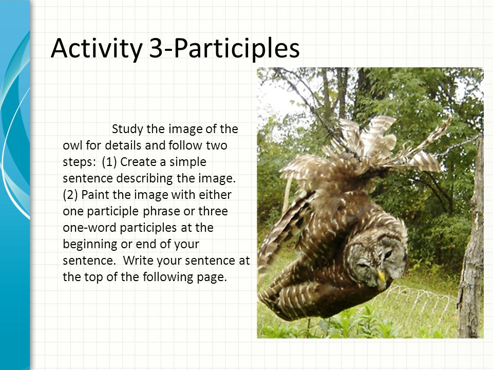 Activity 3-Participles Study the image of the owl for details and follow two steps: (1) Create a simple sentence describing the image.
