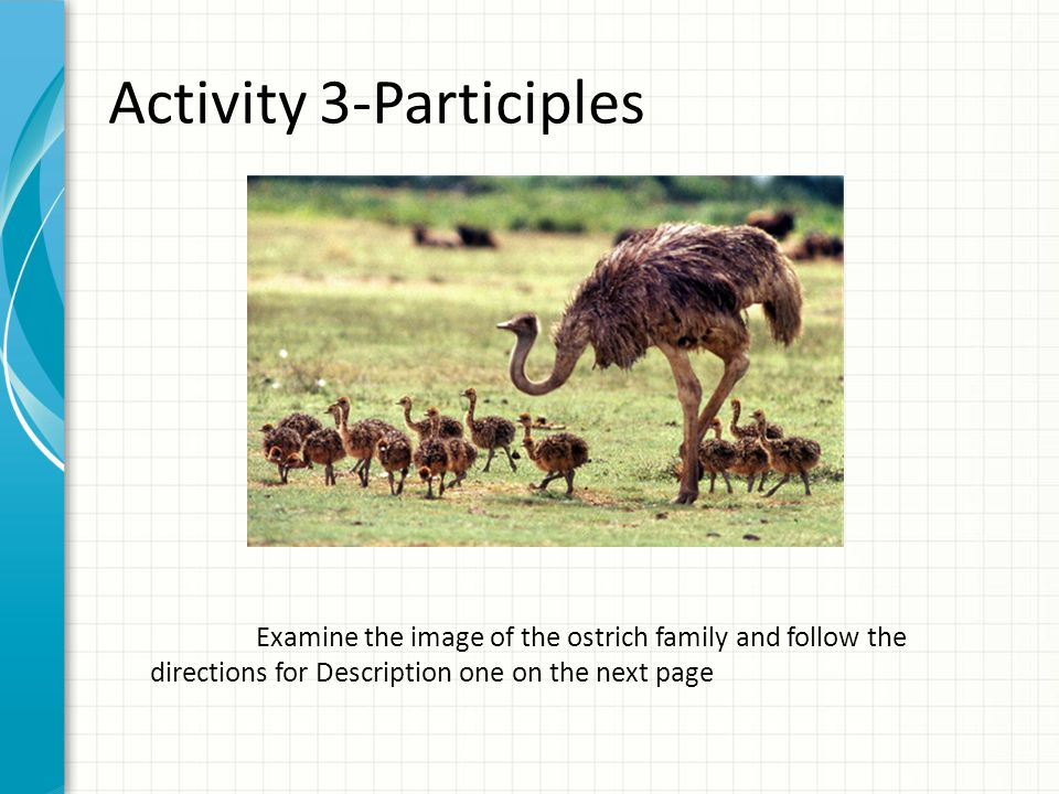 Activity 3-Participles Examine the image of the ostrich family and follow the directions for Description one on the next page
