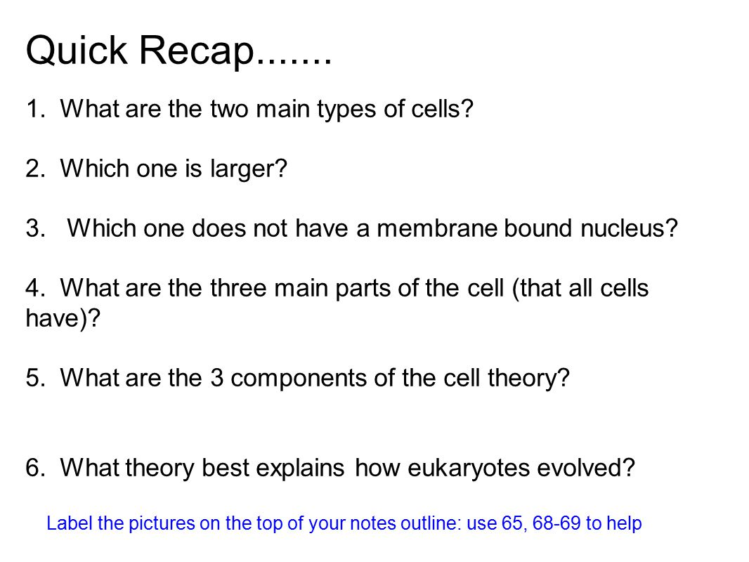 Quick Recap....... 1. What are the two main types of cells? 2. Which one is larger? 3. Which one does not have a membrane bound nucleus? 4. What are t