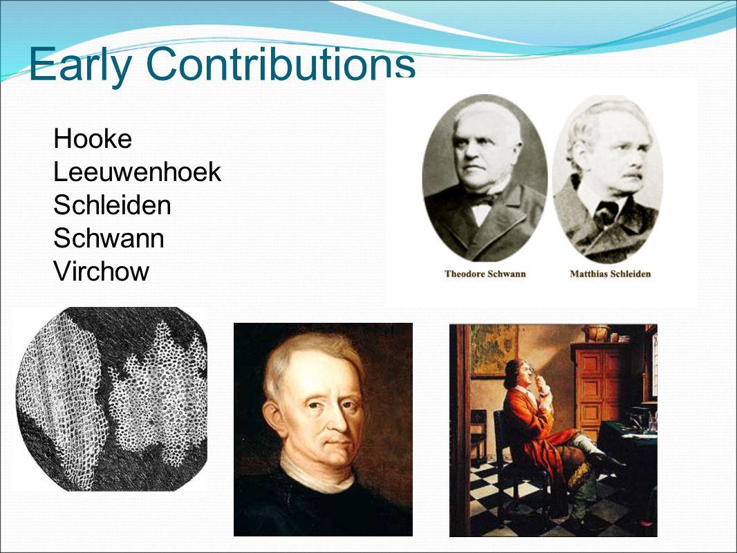 Early Contributions Hooke Leeuwenhoek Schleiden Schwann Virchow