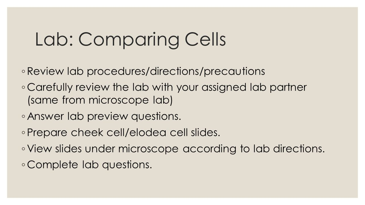 Lab: Comparing Cells ◦ Review lab procedures/directions/precautions ◦ Carefully review the lab with your assigned lab partner (same from microscope lab) ◦ Answer lab preview questions.