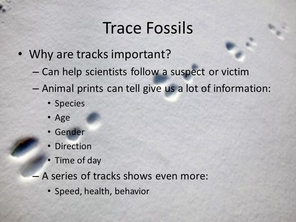 Trace Fossils Why are tracks important.