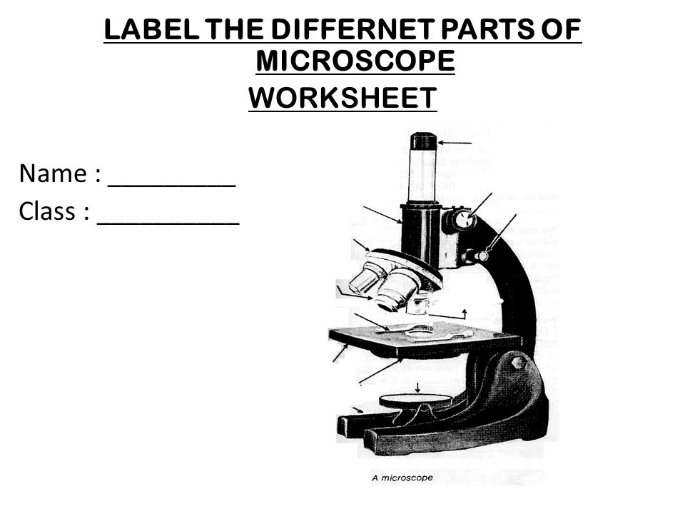 LABEL THE DIFFERNET PARTS OF MICROSCOPE WORKSHEET Name : _________ Class : __________ NAME : _______________________ Class : __________________ NAME :