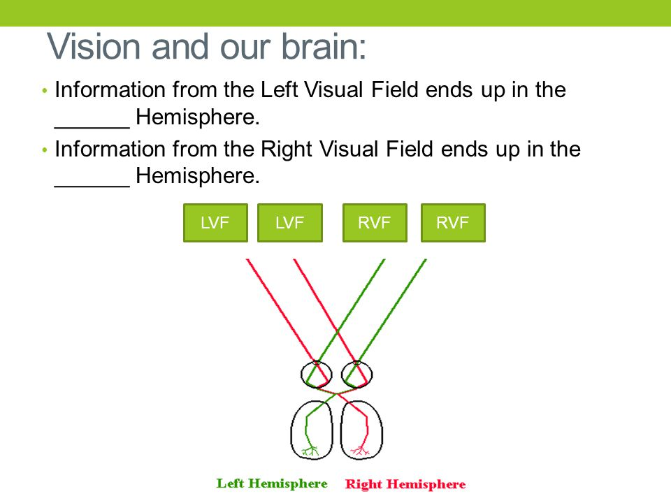 Vision and our brain: Information from the Left Visual Field ends up in the ______ Hemisphere. Information from the Right Visual Field ends up in the