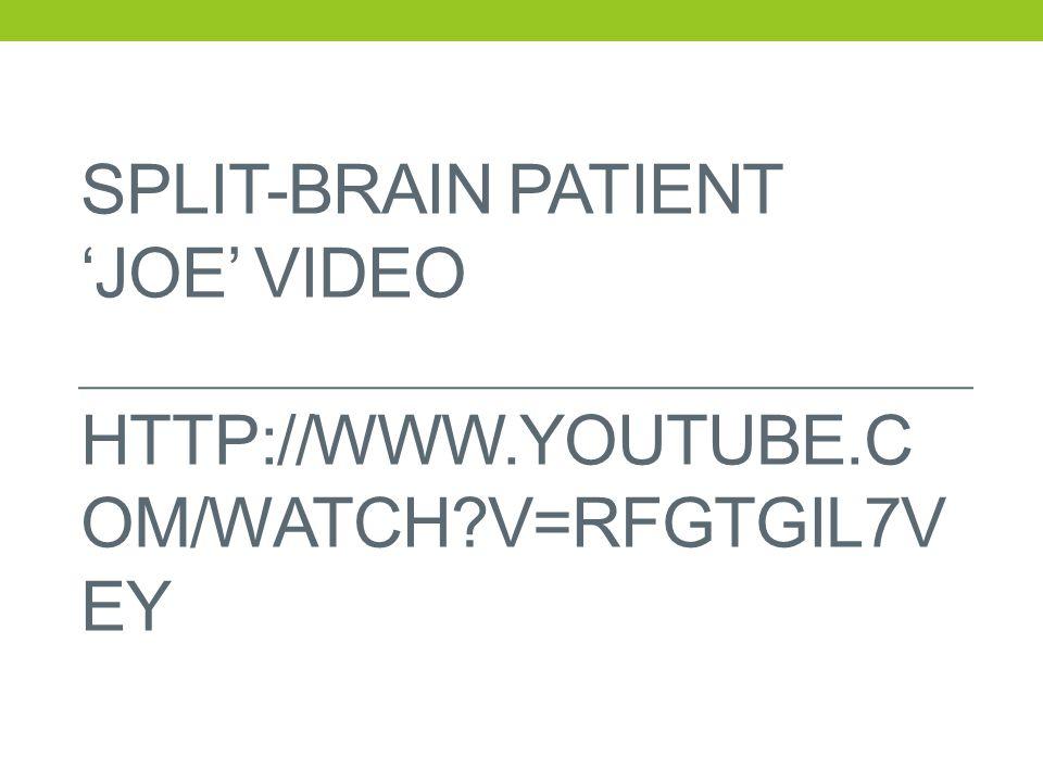SPLIT-BRAIN PATIENT 'JOE' VIDEO HTTP://WWW.YOUTUBE.C OM/WATCH?V=RFGTGIL7V EY