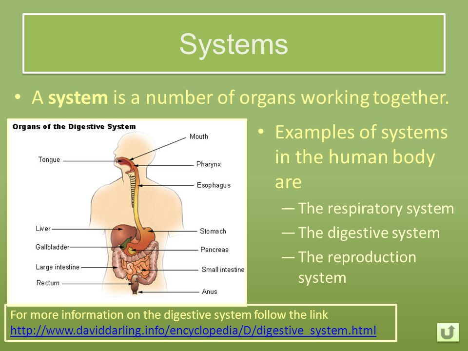 Systems A system is a number of organs working together.