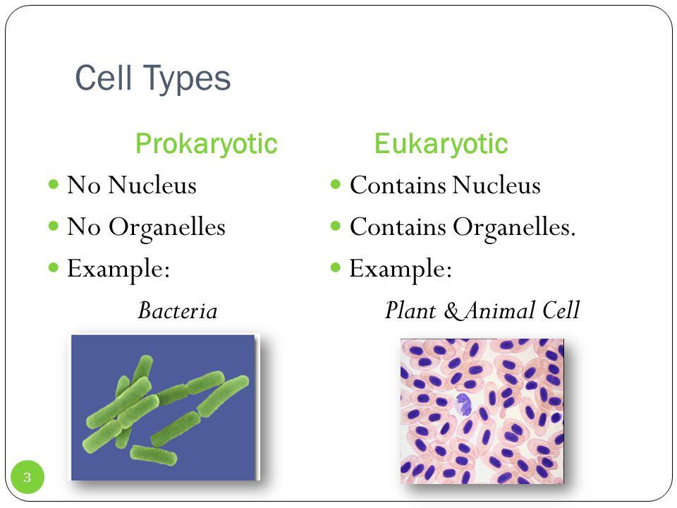Cell Types ProkaryoticEukaryotic No Nucleus No Organelles Example: Bacteria Contains Nucleus Contains Organelles.