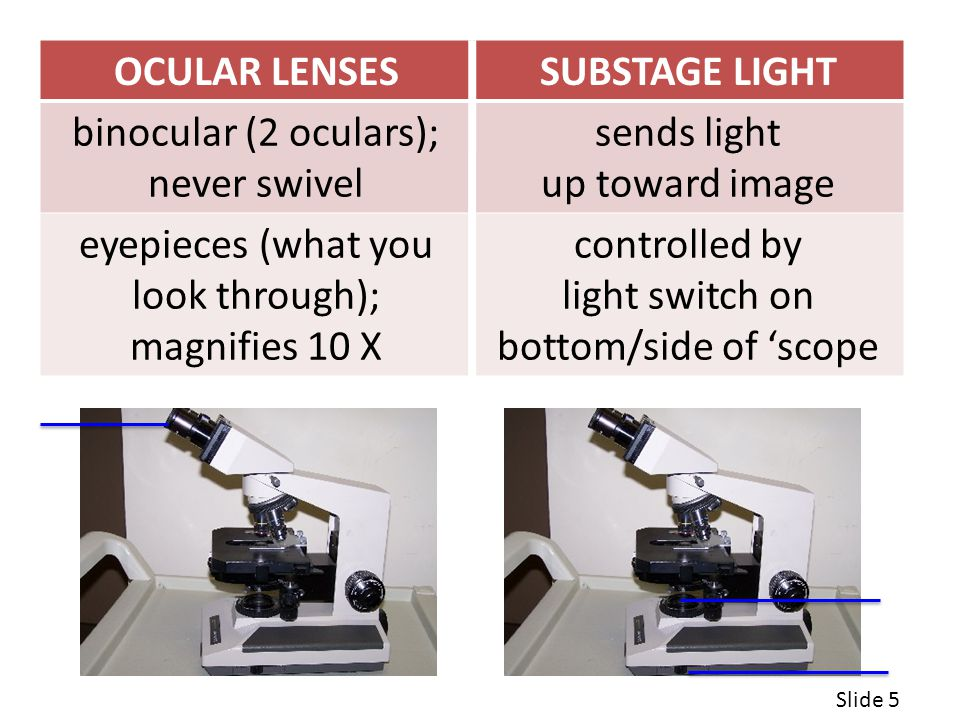 OCULAR LENSESSUBSTAGE LIGHT binocular (2 oculars); never swivel sends light up toward image eyepieces (what you look through); magnifies 10 X controlled by light switch on bottom/side of 'scope Slide 5