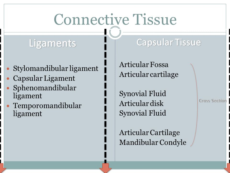 Connective Tissue Stylomandibular ligament Capsular Ligament Sphenomandibular ligament Temporomandibular ligament Articular Fossa Articular cartilage Synovial Fluid Articular disk Synovial Fluid Articular Cartilage Mandibular Condyle http://www.youtube.com/watch?v=lP_VPiYnyNs