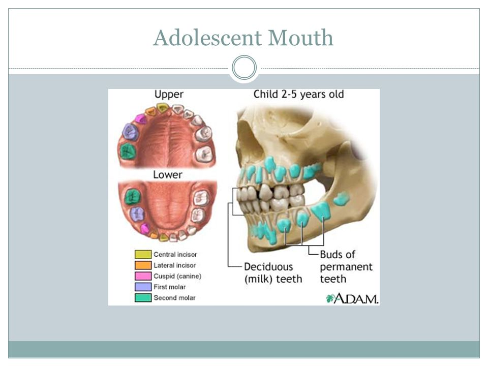 Adolescent Mouth