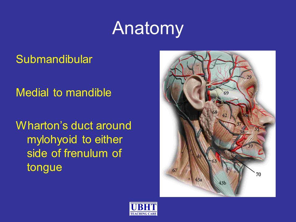 Submandibular Medial to mandible Wharton's duct around mylohyoid to either side of frenulum of tongue