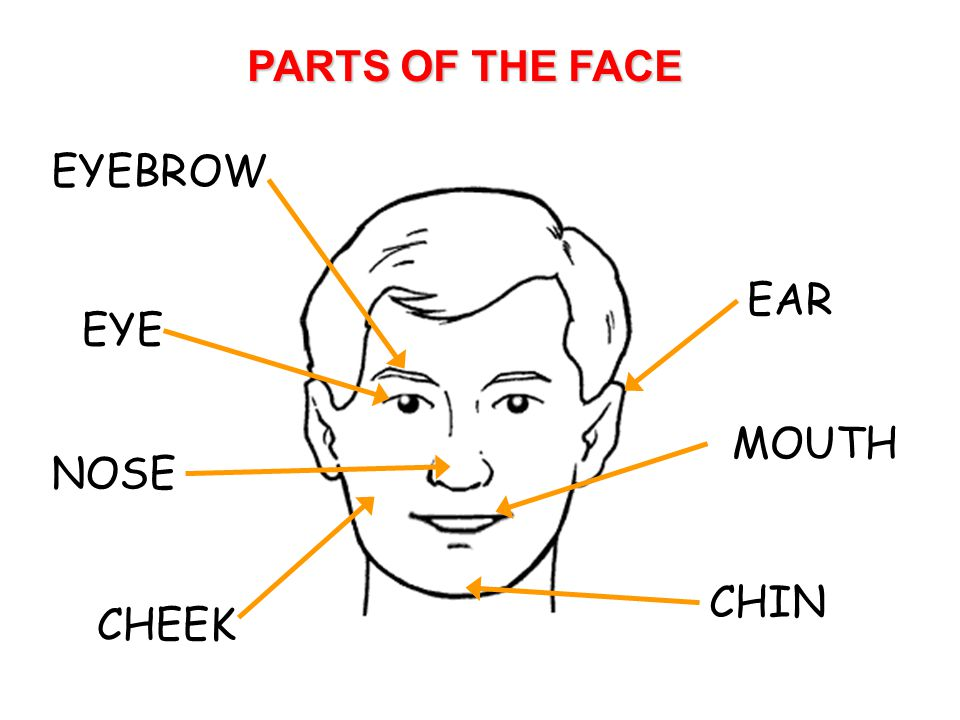 PARTS OF THE FACE EYEBROW EYE NOSE CHEEK CHIN MOUTH EAR