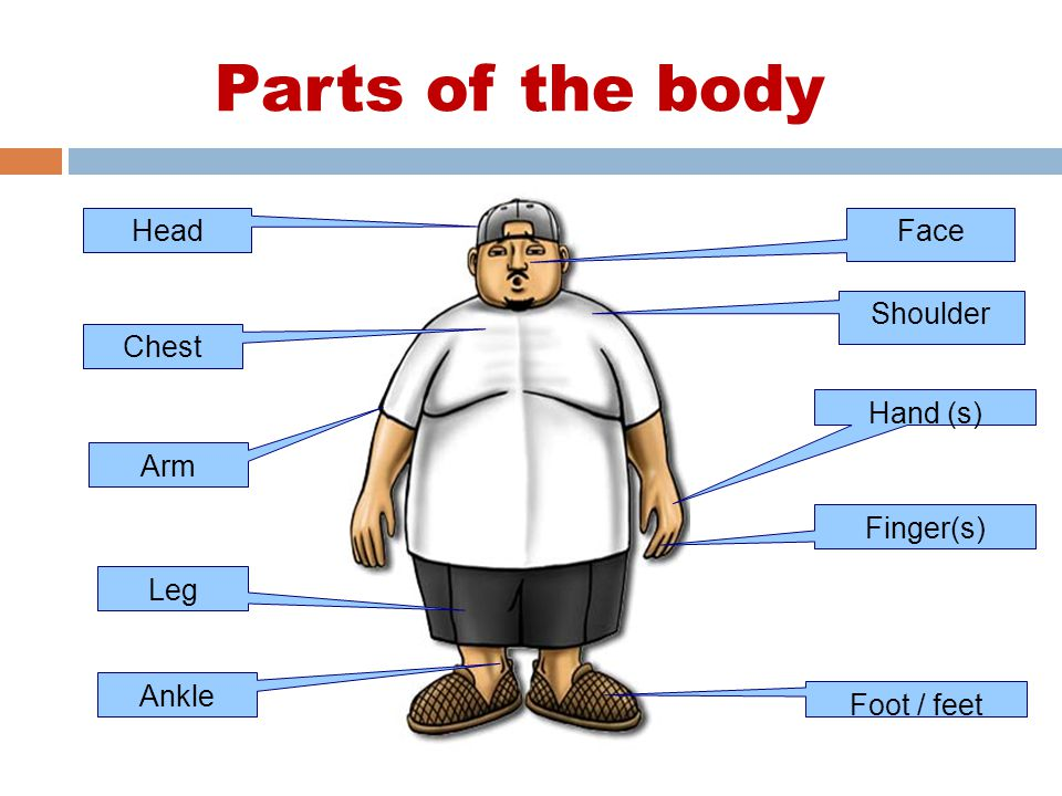 Parts of the body Arm Leg Shoulder Hand (s) Finger(s) Foot / feet Face Ankle Chest Head