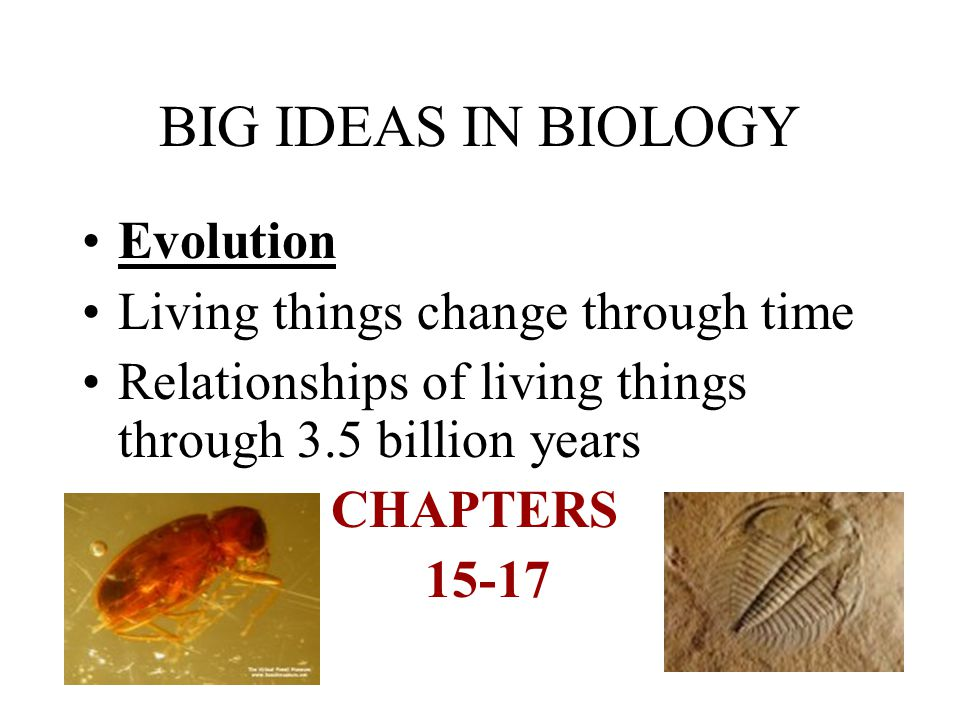 BIG IDEAS IN BIOLOGY Evolution Living things change through time Relationships of living things through 3.5 billion years CHAPTERS 15-17