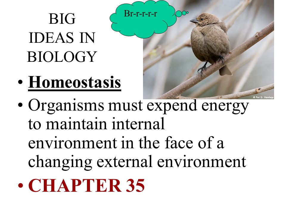BIG IDEAS IN BIOLOGY Homeostasis Organisms must expend energy to maintain internal environment in the face of a changing external environment CHAPTER 35 Br-r-r-r-r