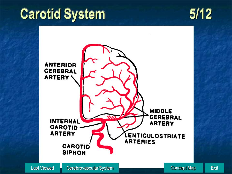 Carotid System 4/12 Last Viewed Last Viewed Cerebrovascular System Cerebrovascular System Exit Concept Map Concept Map