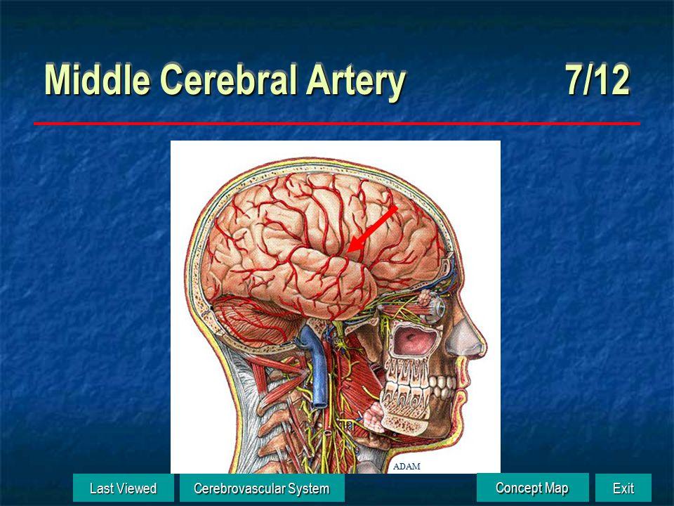 Anterior Cerebral Artery 6/12 ADAM Last Viewed Last Viewed Cerebrovascular System Cerebrovascular System Exit Concept Map Concept Map