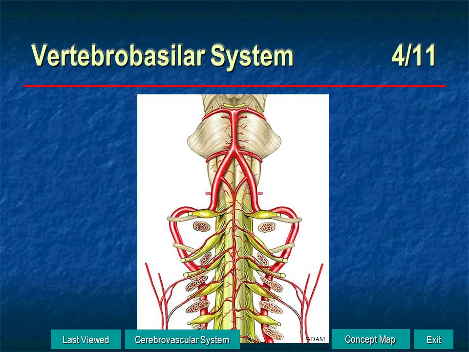 Vertebrobasilar System 3/11 Last Viewed Last Viewed Cerebrovascular System Cerebrovascular System Exit Concept Map Concept Map